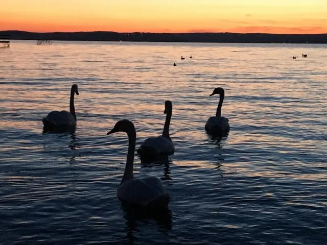 בודפשט אגם בלטון